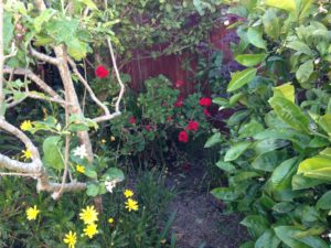 BackGarden-2016-April30-01